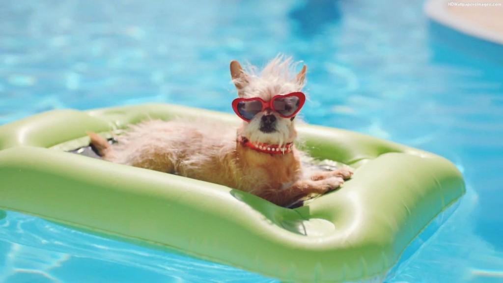 Hondenzwemmen-1024x576.jpg